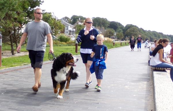 Walk with the dog on leash in Sønderborg on island Als
